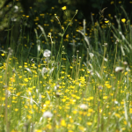Simple Ways to Reduce Allergens In Your Home This Spring